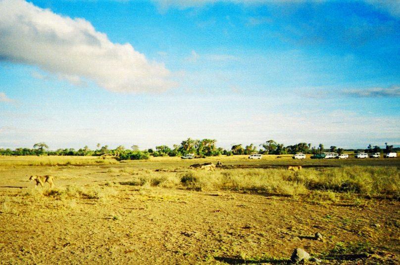 Amboseli_26
