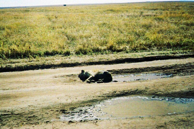 Serengeti_15
