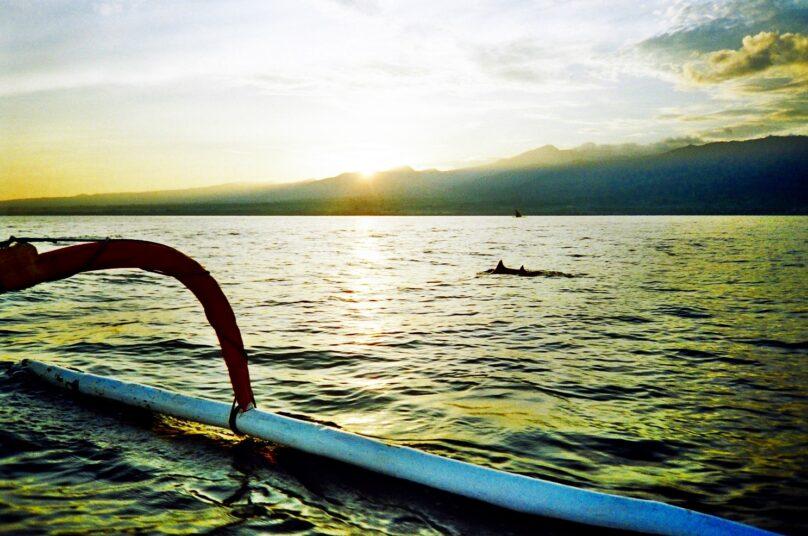 Delfines en Lovina (Subdistrito de Bali, Indonesia)