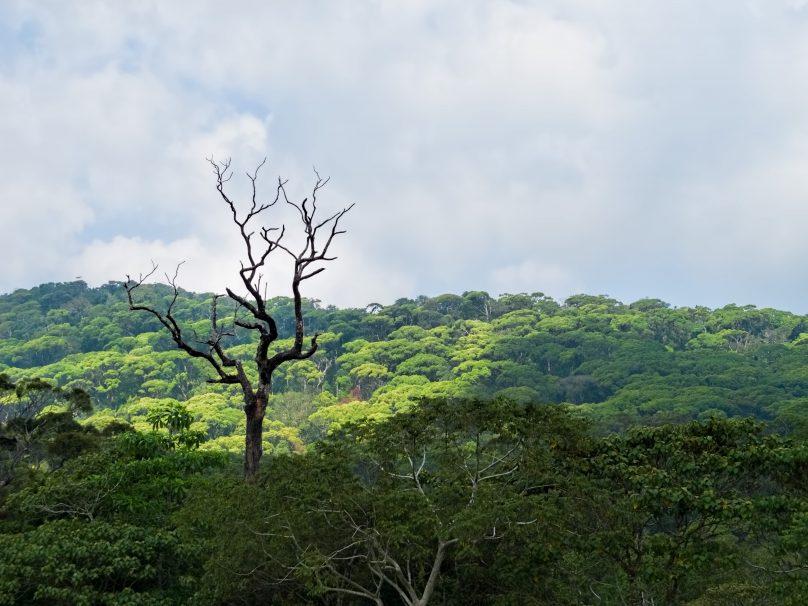 Sinharaja (Sri Lanka)